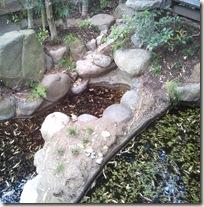 石が崩れて荒れた古池・・・