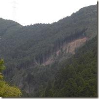 地崩れにより山肌が露出したスギヒノキの山林