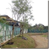 築山と植栽、「ナナコ垣」風フェンスの景