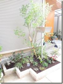 玄関先のシャシャンボと花壇