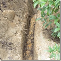 下層の粘土層地盤、表層だけに伸びる根系