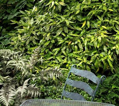 多彩な植物