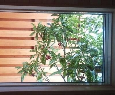 狭い庭 窓