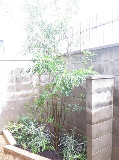 狭い庭 樹木