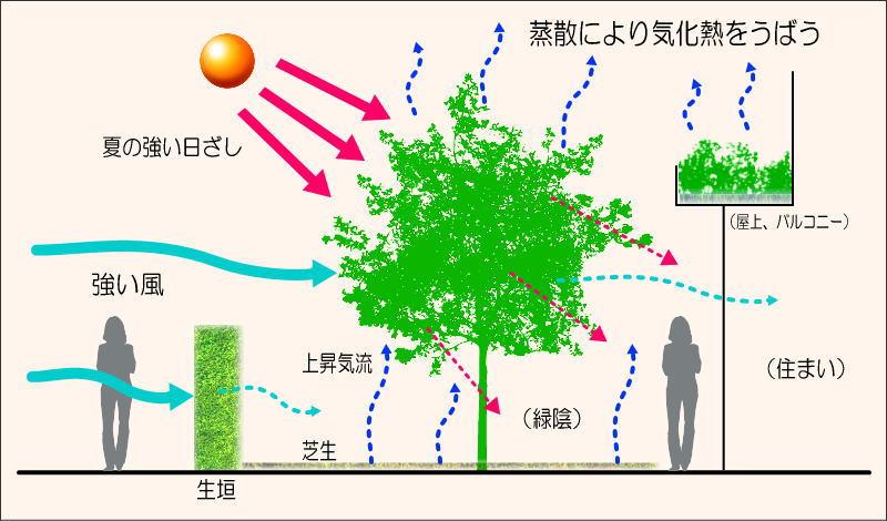 樹木の機能