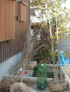 搬入された樹木