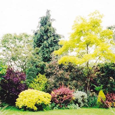 樹木 カラーリーフ