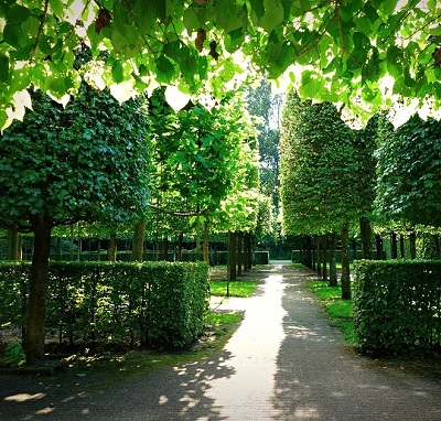 フレーム 樹木