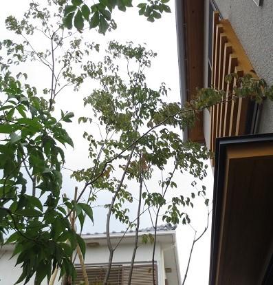 庭木、空間演出、広がり